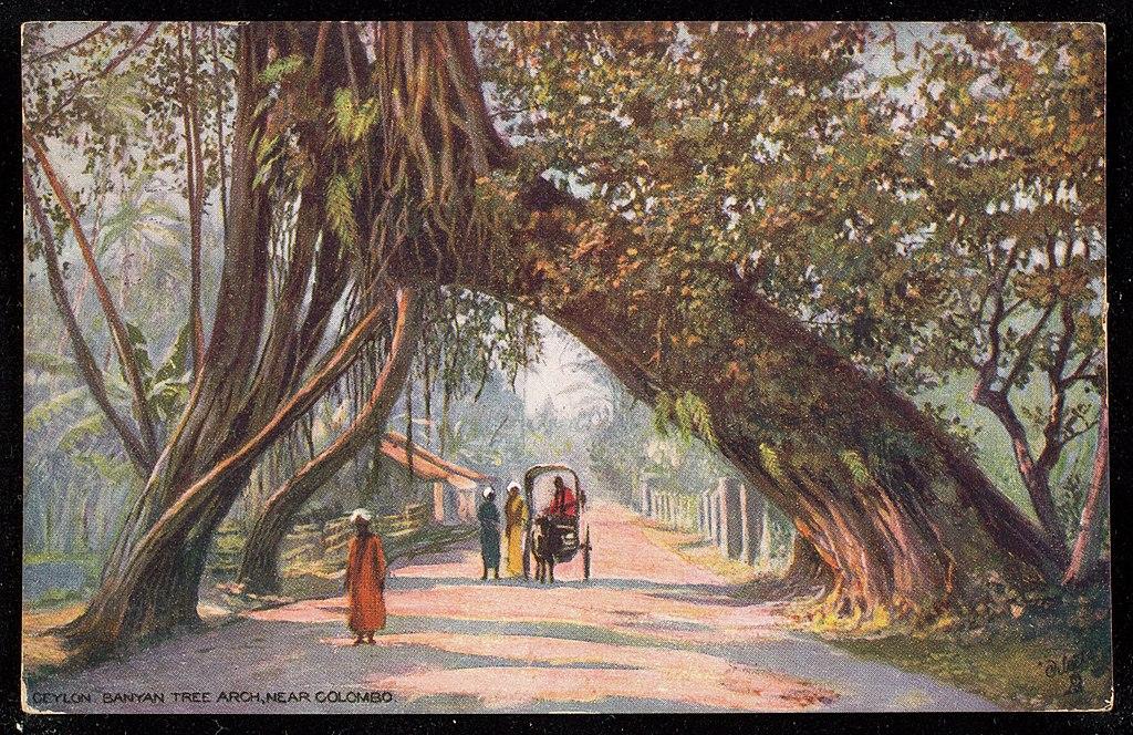 Ceylon_Banyan_Tree_Arch,_Near_Colombo